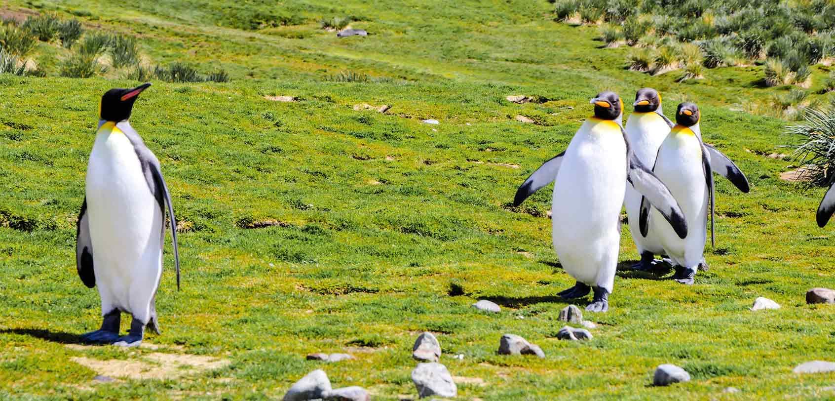 南乔治亚岛:南极野生动物观赏