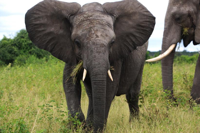乔贝国家公园经济型野生动物园。- 小气的数字游民