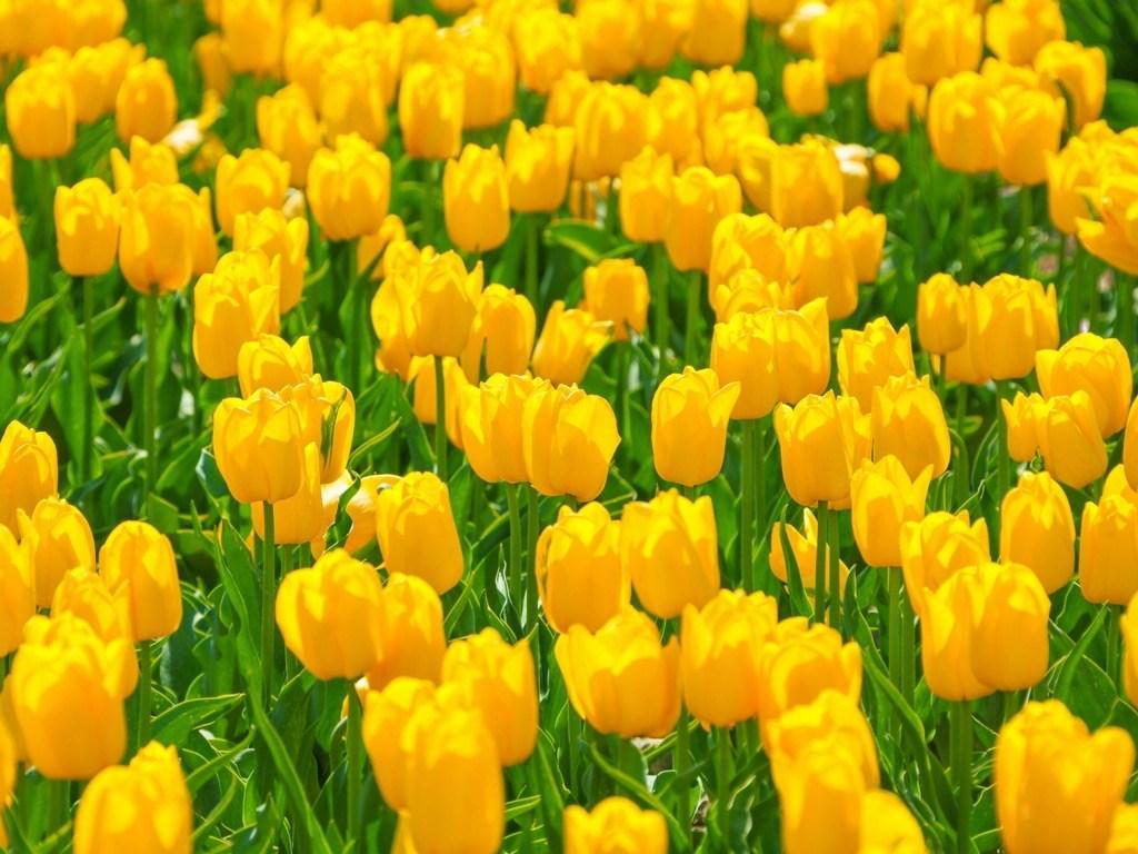 克罗地亚的春天:4月和5月在克罗地亚做什么?