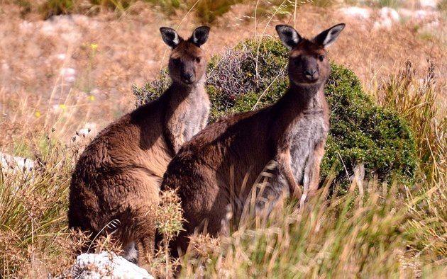 访问南澳大利亚的五个理由