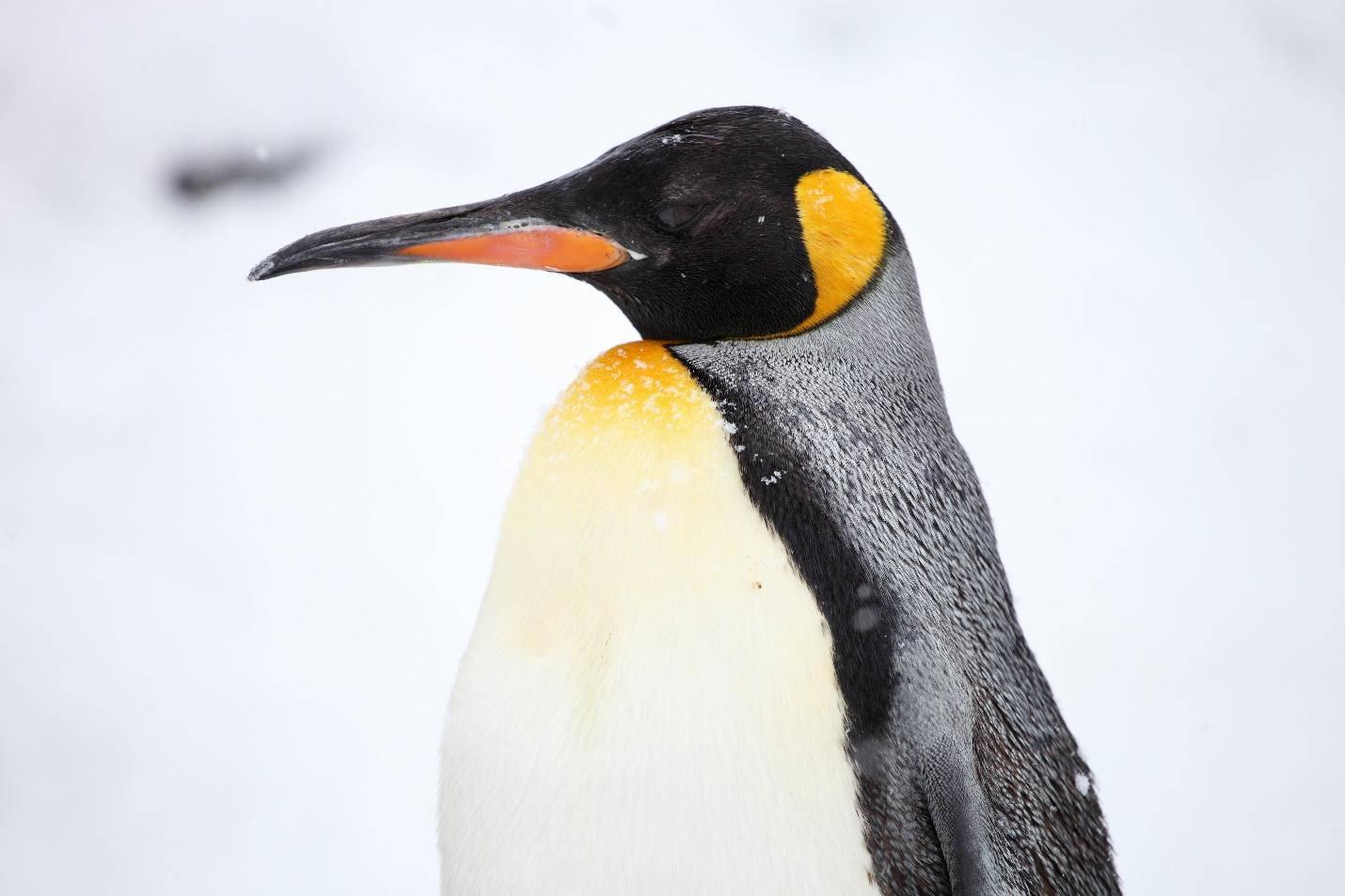 时尚旅行看南极企鹅|一步到位4Ward