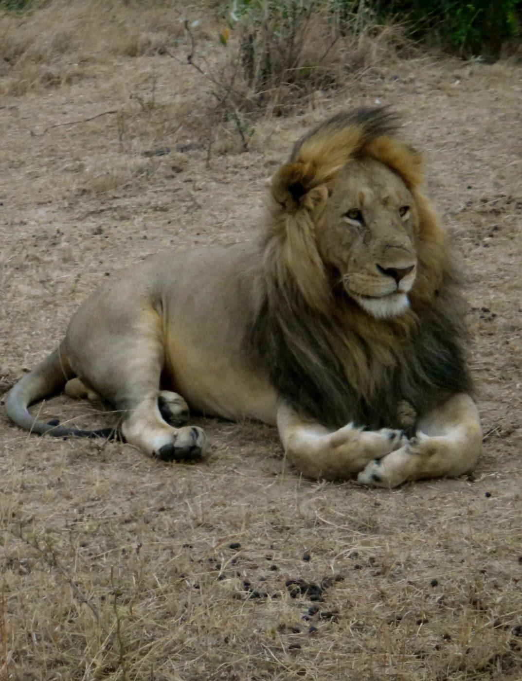 非洲的野生动物园需要多少钱?| 一步之遥4W