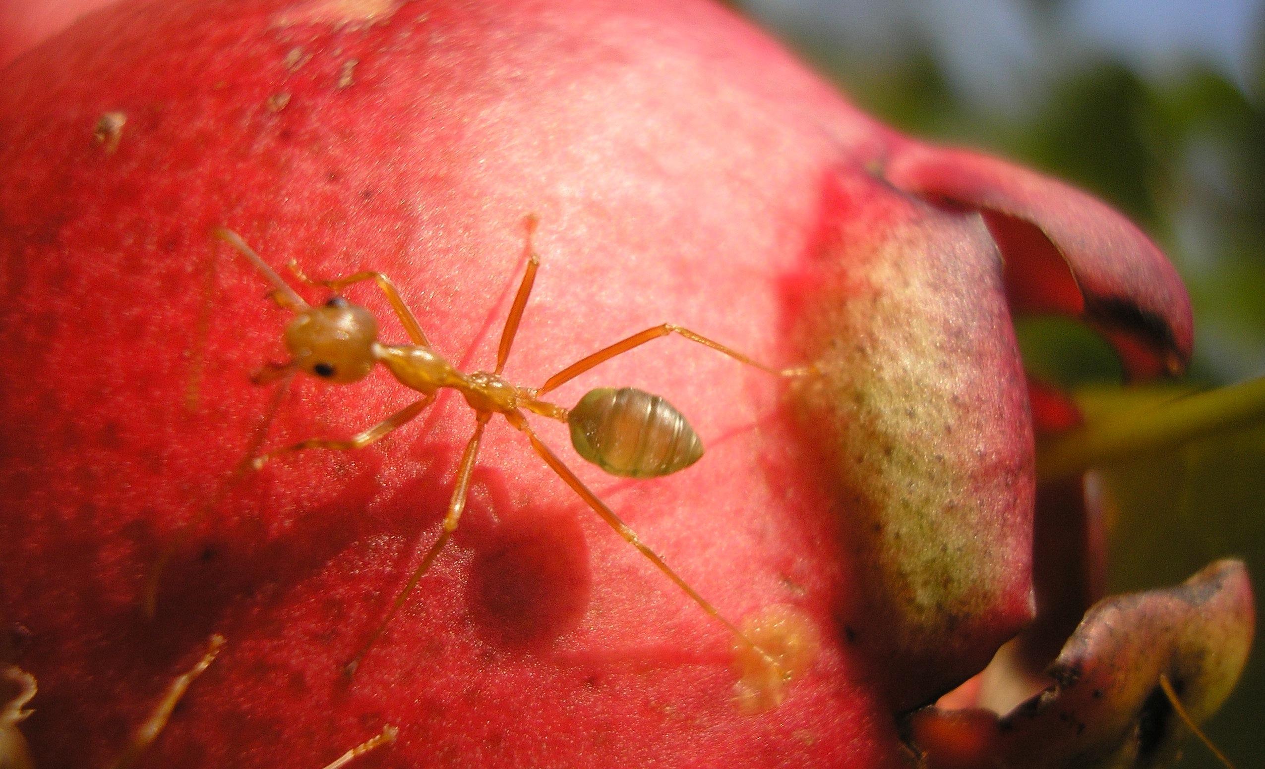 蚂蚁,作者Vicki Hudspith – Rolf Potts