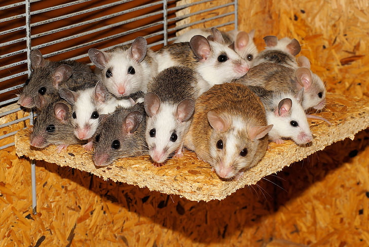 我们不谈老鼠–几乎无所畏惧