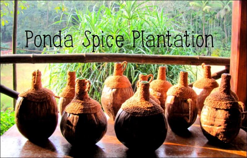 热带香料种植园果阿(庞达) – 穿高跟鞋的嬉皮士