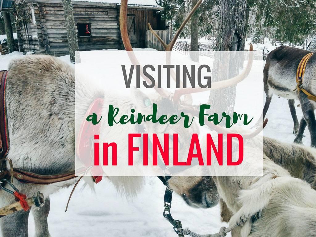 参观芬兰的驯鹿场,度过最可爱的一天 – 穿高跟鞋的嬉皮士