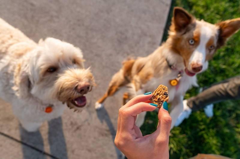 你应该在什么时候给你的狗吃CBD点心?  一步之遥4W
