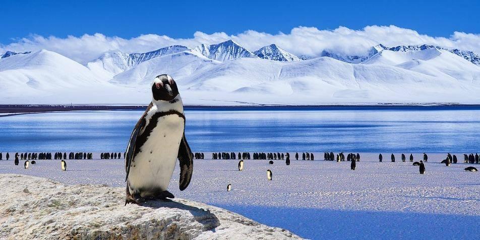 想去南极洲旅游?这些旅游博主将激励你